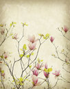 Magnolia flower with Old antique vintage paper Royalty Free Stock Photo