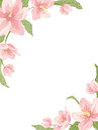 Magnolia sakura hellebore corner frame vertical