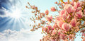 Magnolia tree blossom with colourful sky on background Royalty Free Stock Photos