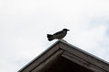 Magpies on the roof Royalty Free Stock Photo