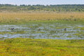 Maguari Stork birds at Swamp in Lagoa do Peixe lake
