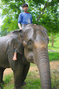 Mahout Royalty Free Stock Photography