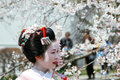 Maiko kamishichiken kyoto japan april has attent to baika sai festival also baien ume garden Royalty Free Stock Photo