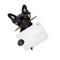 Mail delivery post dog Royalty Free Stock Photo