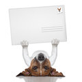 Mail dog Royalty Free Stock Photo