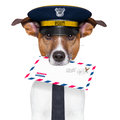 Mail dog postman with a air letter Stock Image