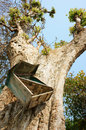 Mailbox, tree trunk, mail box Royalty Free Stock Photo