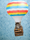 Maine Coon kitten in hot air balloon Stock Images
