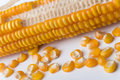Maize Stock Photos