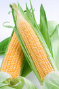 Maize Royalty Free Stock Photo
