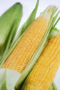 Maize Royalty Free Stock Photos
