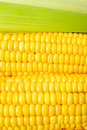 Maize close up Royalty Free Stock Photos