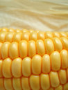 Maize cob Stock Image