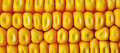 Maize corn ceral Royalty Free Stock Photo