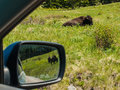 Majestic american bison at the national range in montana usa as seen through the window af a car and mirror Stock Photos