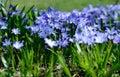 Majestic blue wildflower meadow in summer sunlight Royalty Free Stock Photo