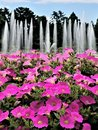 Fountains And Flowers