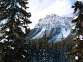 Majestic mountain with a snowy forest Royalty Free Stock Photo