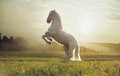 Majestátne z kráľovský biely kôň