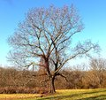 Majestic southern tree an adult on the side of a dirt embankment Royalty Free Stock Images