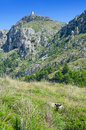 Majorca nature wild goat in rocky scenery Royalty Free Stock Images