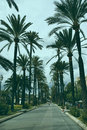 Majorca palm tree avenue Stock Photos
