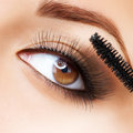 Make-up. Applying Mascara Royalty Free Stock Photo