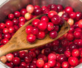 Making cranberry sauce Royalty Free Stock Photo