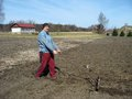 Making furrows elderly man make parallel shallow by homemade tool Royalty Free Stock Images