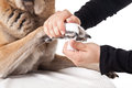 Making a paw bandage. First aid for a dog. Royalty Free Stock Photos