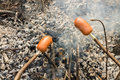 Making sausages on the fire. Snack in the forest. Food tourists. Royalty Free Stock Photo