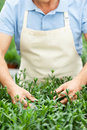 Making the world green cropped image of man in apron taking care of plants while standing in greenhouse Stock Photo