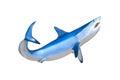 Mako Shark Showing Teeth Swimm...