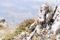 Makro landscape plants on rock background nature Stock Image