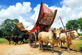 Malacca Bullock Cart Stock Photos