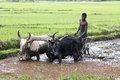 Malagasy Farmers Plowing Agric...
