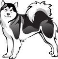 Malamute dog breed vector drawing Royalty Free Stock Photo