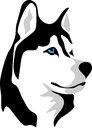 Malamute head of or husky color illustration Stock Images