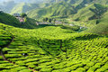 Malaysia, Cameron Highlands Royalty Free Stock Photo