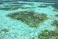 Maldives green seawater the at beach Royalty Free Stock Photography