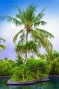 Maldives.Pool en jardín tropical Foto de archivo libre de regalías