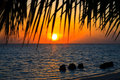 Maldivian Sunset Royalty Free Stock Photo