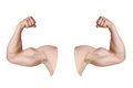 Male arms with flexed biceps muscles Royalty Free Stock Photo