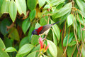 Male black throated sunbird beautiful aethopyga saturata with flower Royalty Free Stock Photos