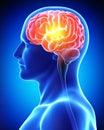 Cerebro en azul