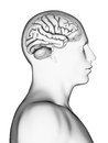 Male brain d rendered illustration Stock Photo