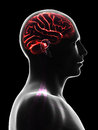 Male brain d rendered illustration Stock Images