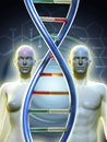 Male and female human figures linked by a dna chain digital illustration Stock Images