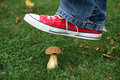 Male foot ready to step on a mushroom wild Stock Photography