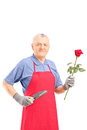Male gardener holding a rose flower and gardening equipment isolated on white background Royalty Free Stock Images
